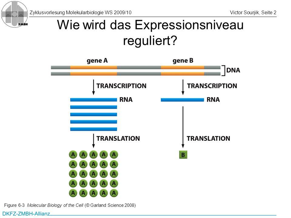 Wie wird das Expressionsniveau reguliert