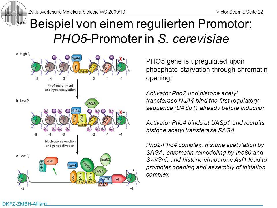 Zyklusvorlesung Molekularbiologie WS 2009/10