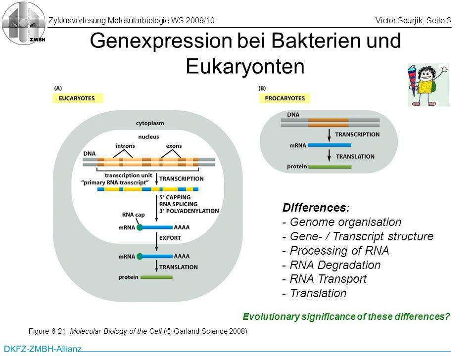 Genexpression bei Bakterien und Eukaryonten