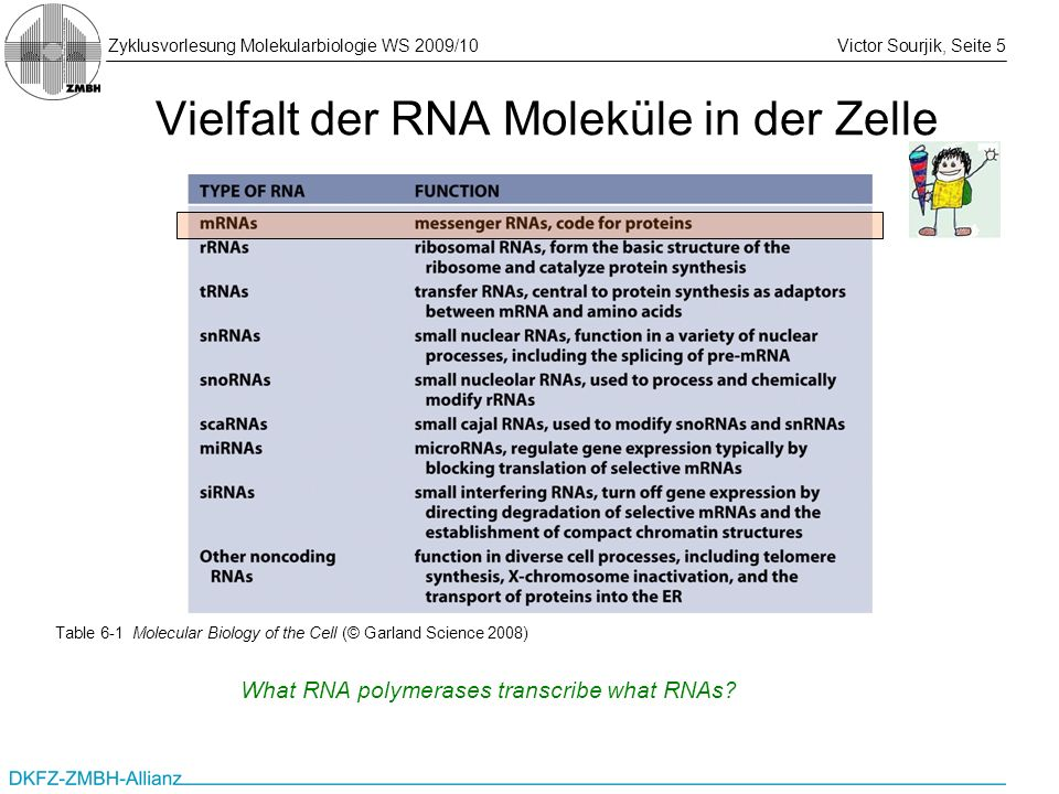 Vielfalt der RNA Moleküle in der Zelle