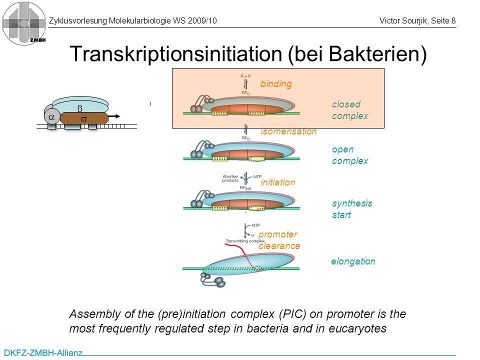 Transkriptionsinitiation (bei Bakterien)