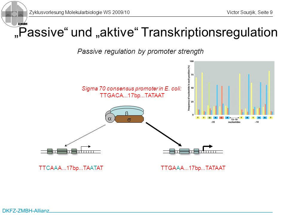"""Passive und ""aktive Transkriptionsregulation"