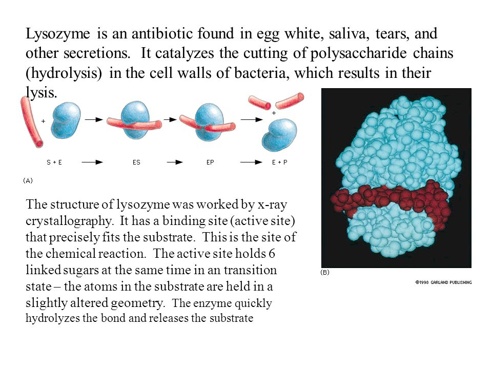 lysozyme from egg white using chromatography Protein purification  for the efficient purification of chicken egg white lysozyme  chromatography • use glucochitin .