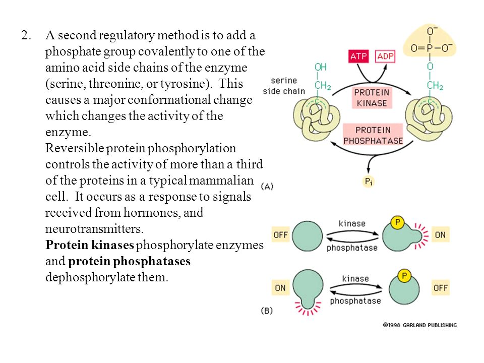regulatory proteins hormones reviewer group 1 Roman tomasz drews director regulatory affairs cmc biologics at daiichi sankyo, inc standort basking ridge, new jersey branche pharmazie.