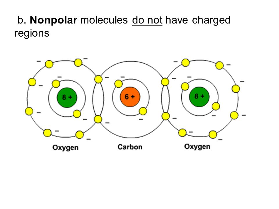 b. Nonpolar molecules do not have charged regions