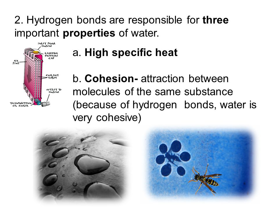 2. Hydrogen bonds are responsible for three important properties of water.