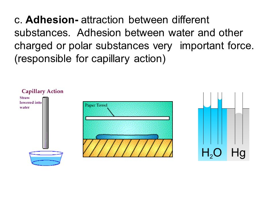 c. Adhesion- attraction between different substances