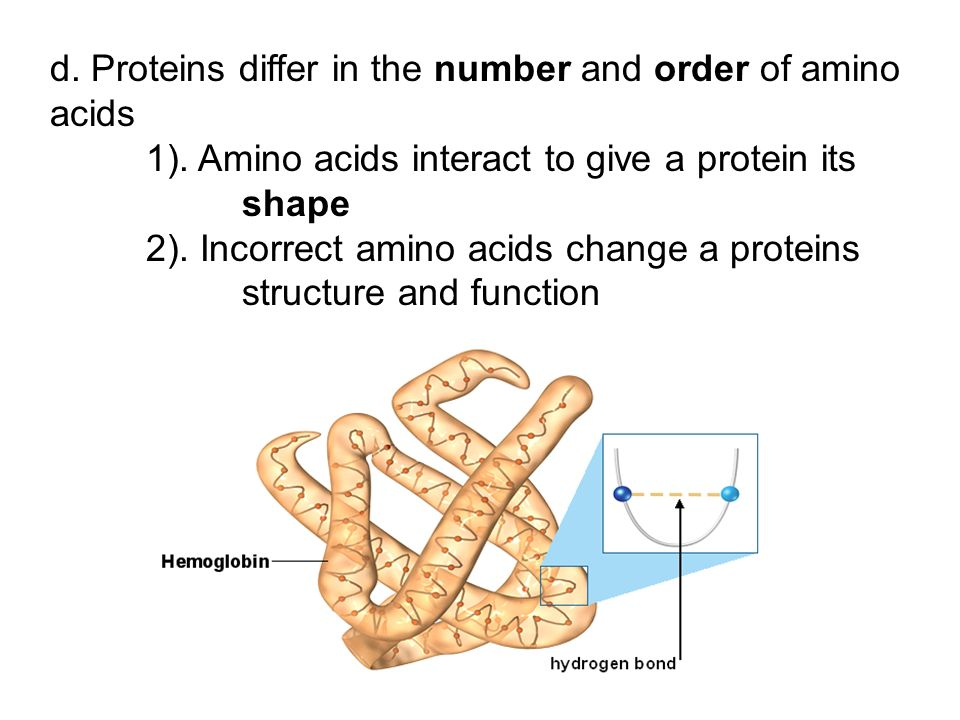 d. Proteins differ in the number and order of amino acids