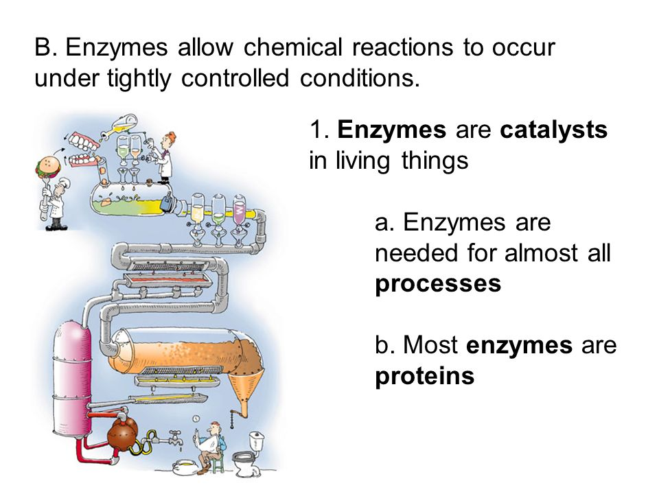 1. Enzymes are catalysts in living things