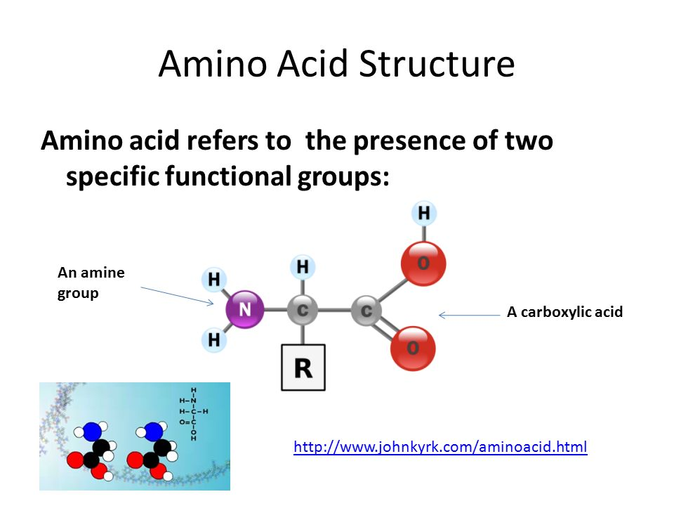 amino acids essay 2 Amino acids are made of the amino group (nh 2), carboxyl has been discovered only recently and this is why many health sites still mention only 20 amino acids 2.