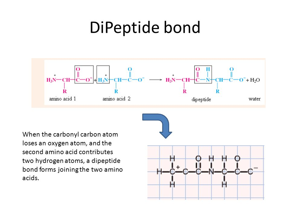 Amino Acids and Proteins - ppt video online download