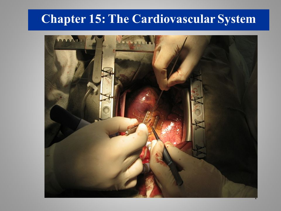 Chapter 15: The Cardiovascular System - ppt video online download