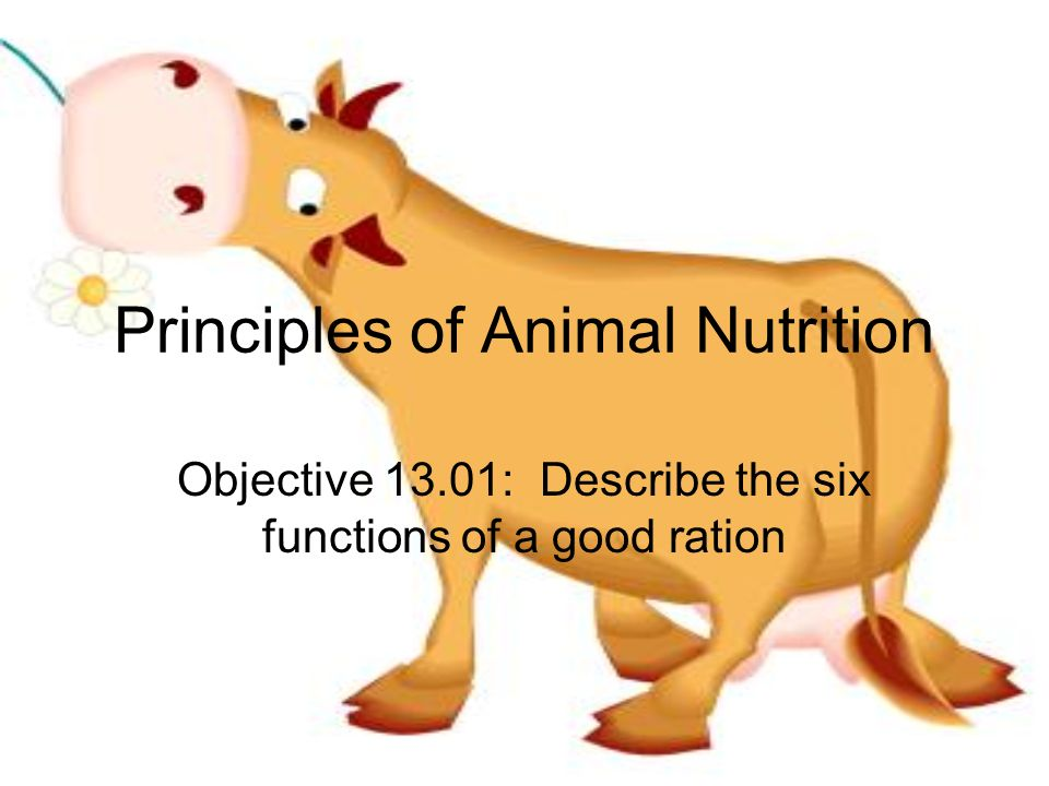Principles of Animal Nutrition - ppt video online download