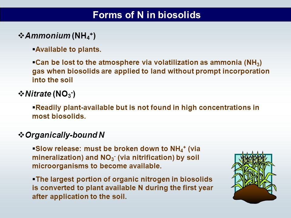 Forms of N in biosolids Ammonium (NH4+) Nitrate (NO3-)