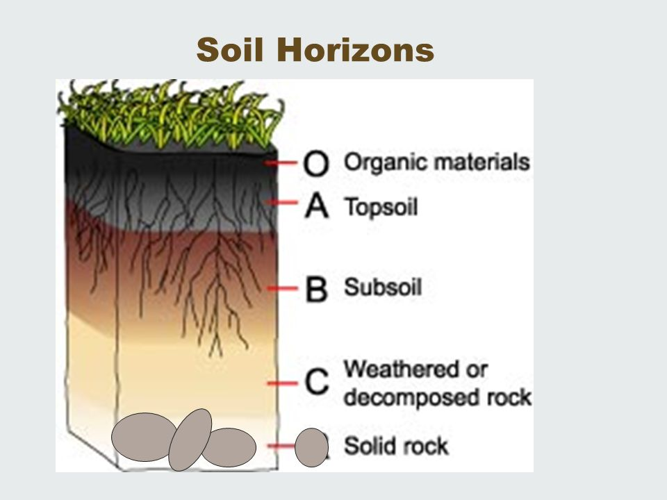 Ap environmental science soil resources ch 14 living in for Soil horizons for kids