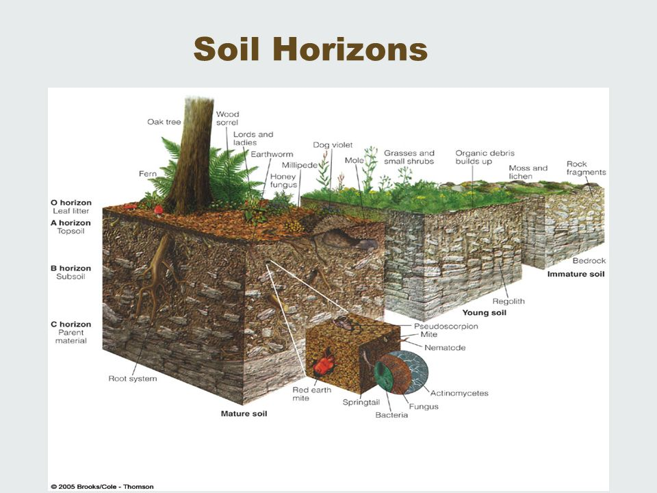 Ap environmental science soil resources ch 14 living in for Soil horizons
