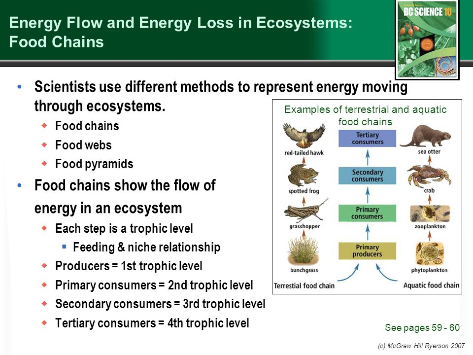 flow of energy through the ecosystem Photoautotrophs, such as plants, algae, and photosynthetic bacteria, serve as the energy source for a majority of the world's ecosystems these ecosystems are often described by grazing food webs.
