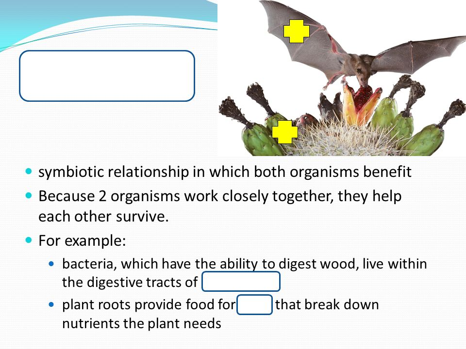 the symbiotic relationships between microbial organisms and plants Symbiotic relationships - parasitism - commensalism - mutualism symbiosis refers to relationships between organisms of different species that show an intima slideshare uses cookies to improve functionality and performance, and to provide you with relevant advertising.