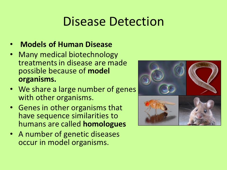 humans share many traits with disease Autosomal recessive traits is one pattern of inheritance for a trait, disease because it takes two copies of a trait to display a trait, many people can.