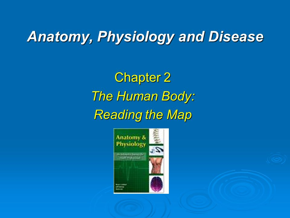 anatomy physiology and disease pdf
