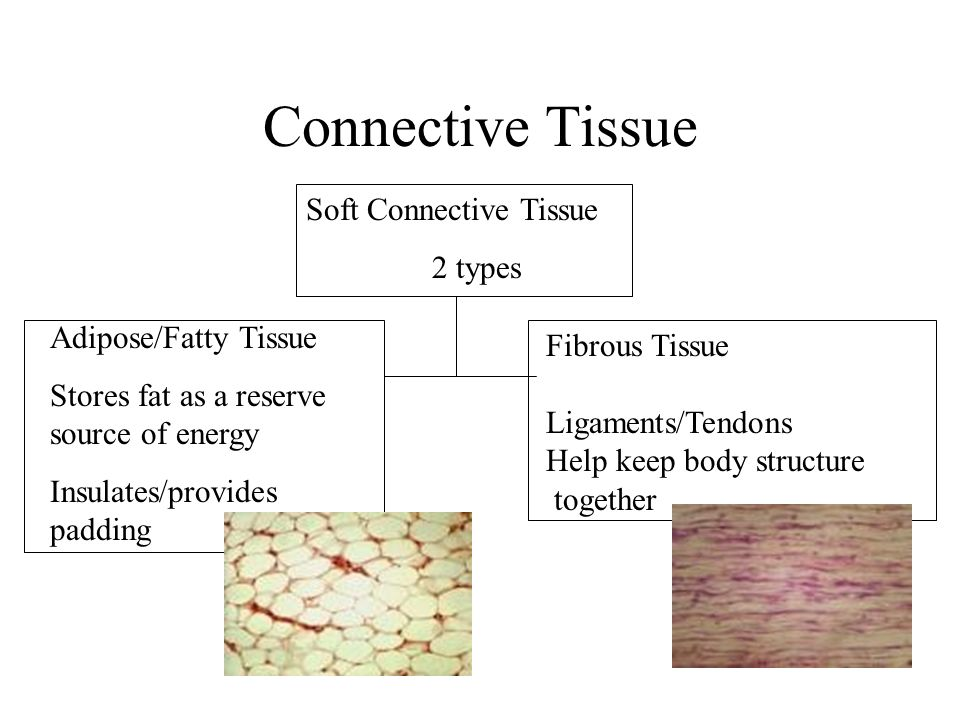 Amazing Anatomy Tissue Types Sketch - Anatomy And Physiology Biology ...