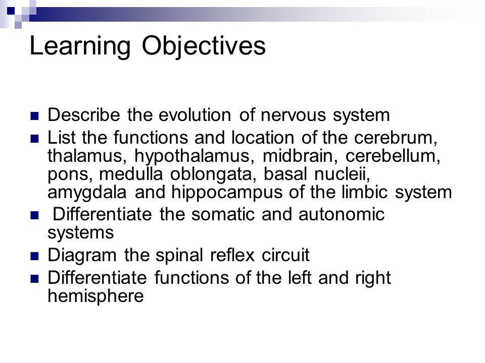 chapter 38 nervous system