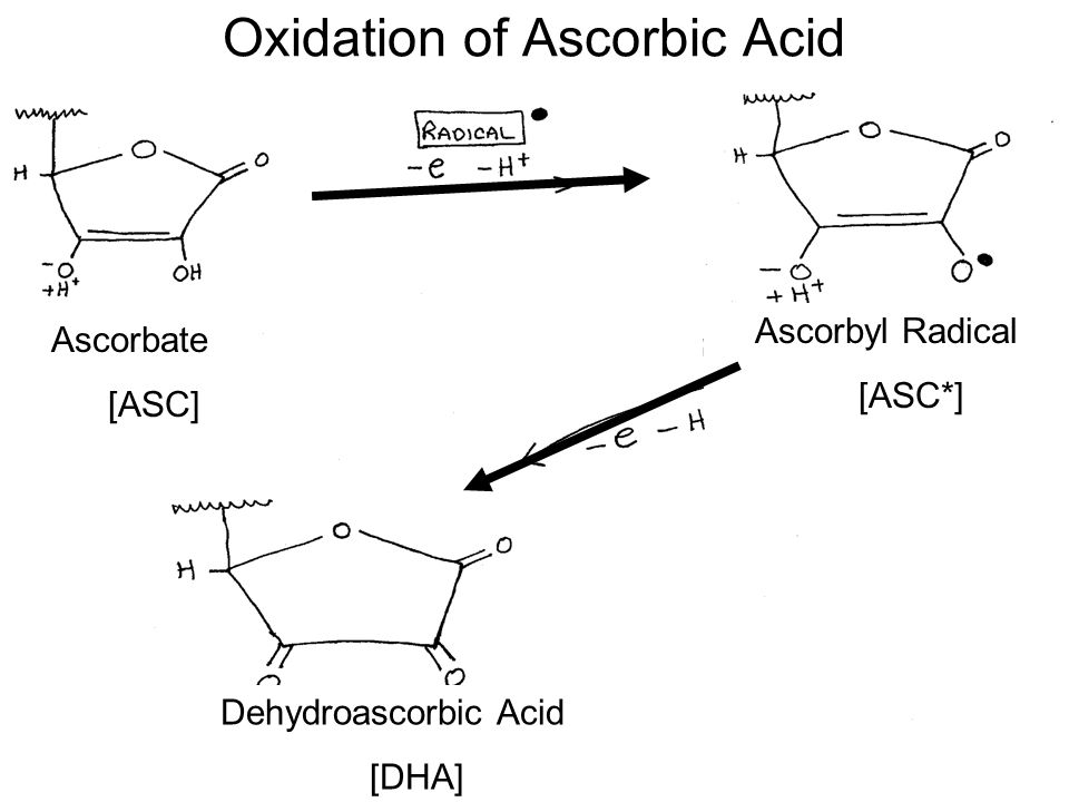 oxidation rate of ascorbic acid in This note describes aspects of the rate of degradation of l-ascorbic acid and the nature of some of its degradation products using plrp-s columns bromine oxidation of l-ascorbic acid hplc of freshly prepared solutions of l-ascorbic acid treated.