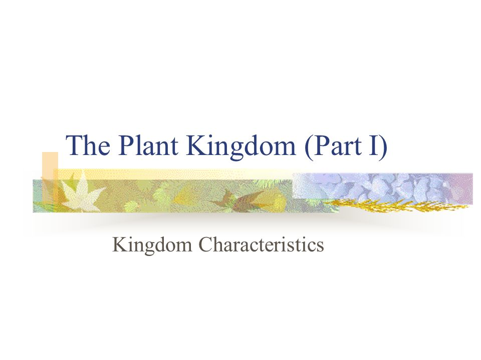 The Plant Kingdom (Part I)