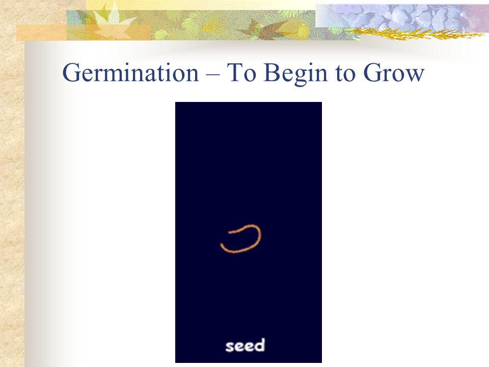 Germination – To Begin to Grow
