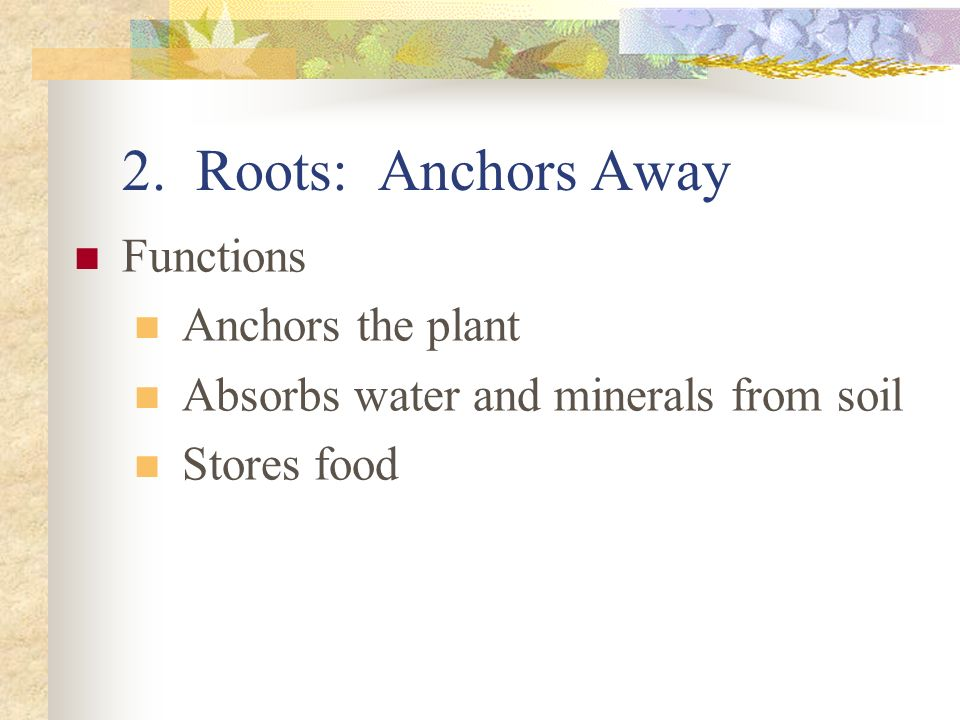 2. Roots: Anchors Away Functions Anchors the plant