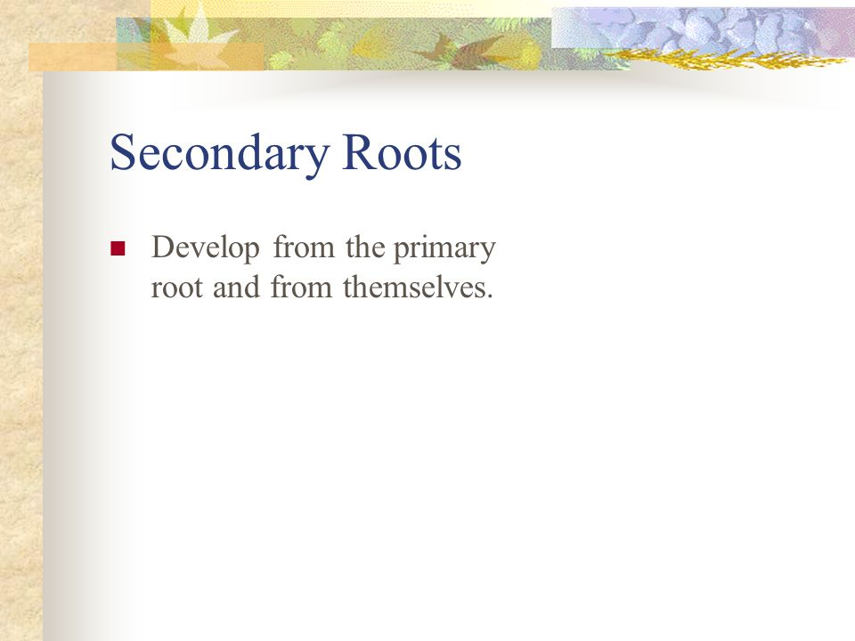 Secondary Roots Develop from the primary root and from themselves.
