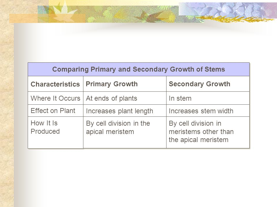 Comparing Primary and Secondary Growth of Stems