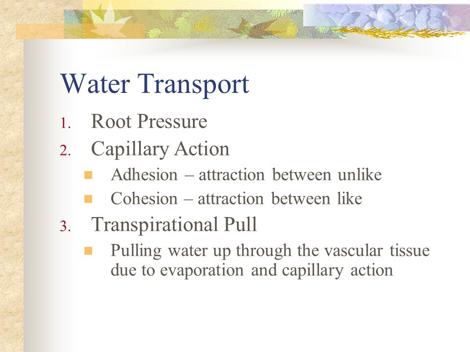 Water Transport Root Pressure Capillary Action Transpirational Pull