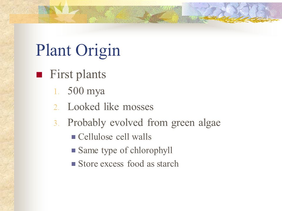 Plant Origin First plants 500 mya Looked like mosses
