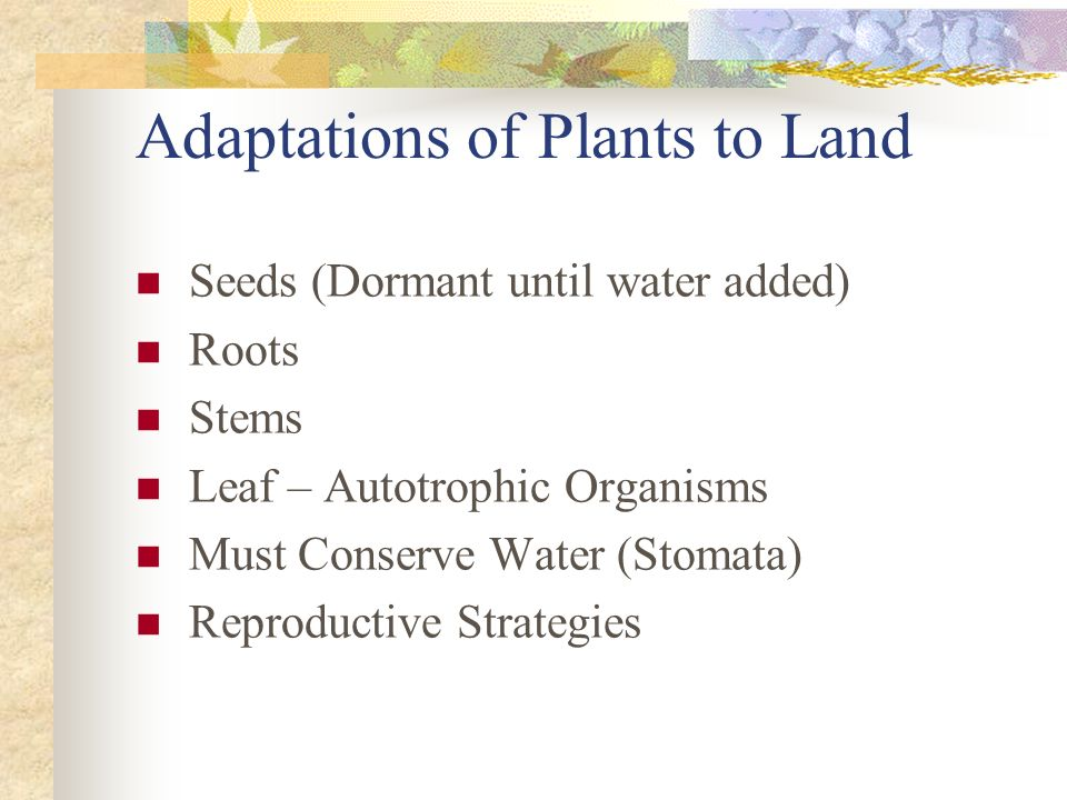 Adaptations of Plants to Land
