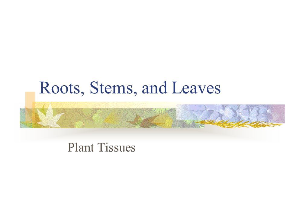 Roots, Stems, and Leaves Plant Tissues