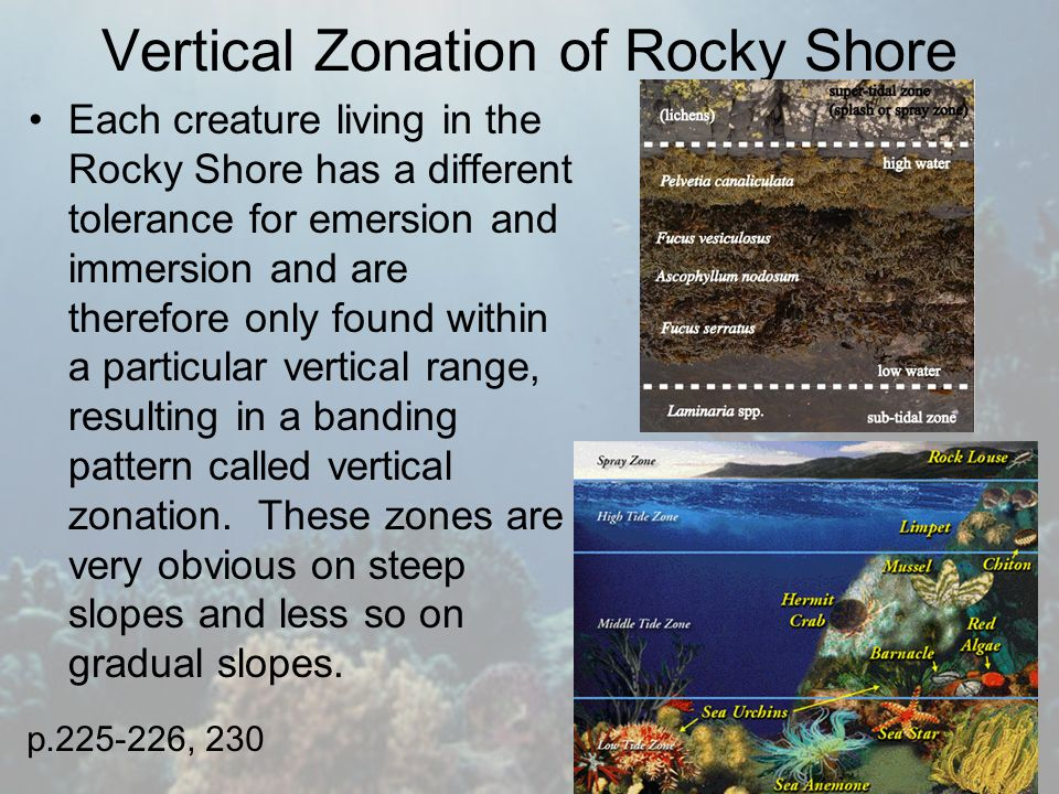 zonation on a rocky shore essay Figure 1 vertical zonation in the pacific rocky intertidal zone, adapted from stephenson and stephenson (1949) sea stars (levinton 1982) the low tidal zone is domi-nated by kelp and surf grass (see figure 1.