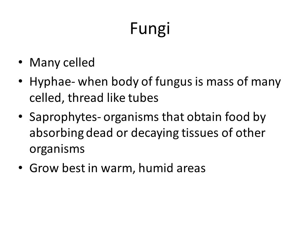 Fungi Many celled. Hyphae- when body of fungus is mass of many celled, thread like tubes.