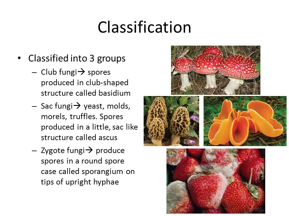 Classification Classified into 3 groups