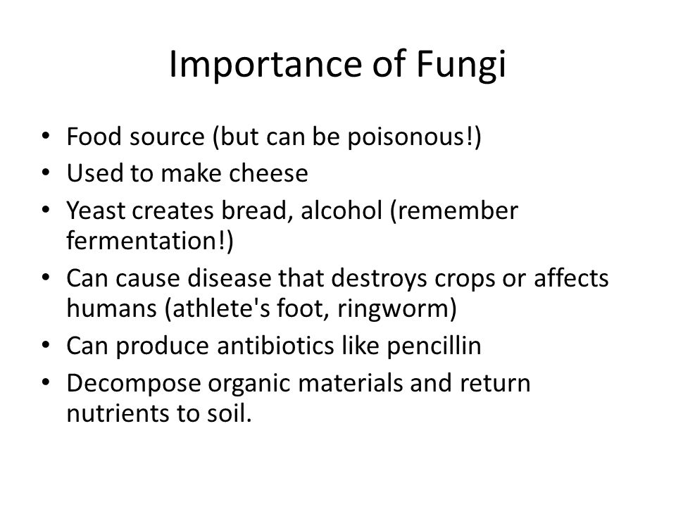 Importance of Fungi Food source (but can be poisonous!)