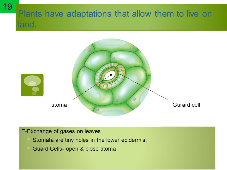 Plants have adaptations that allow them to live on land.