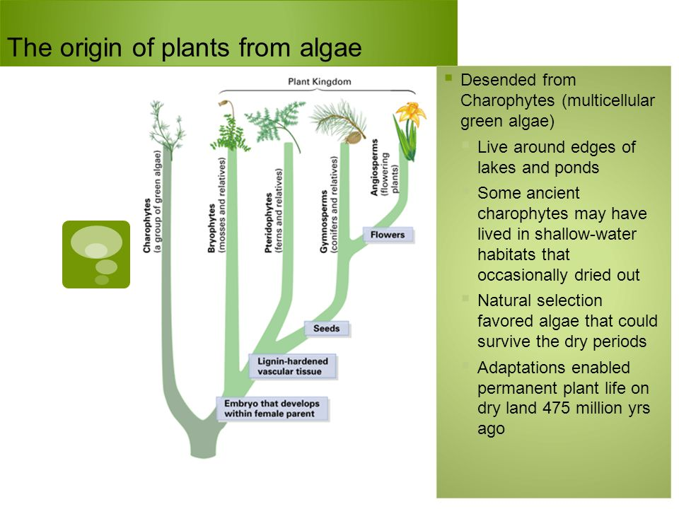 The origin of plants from algae