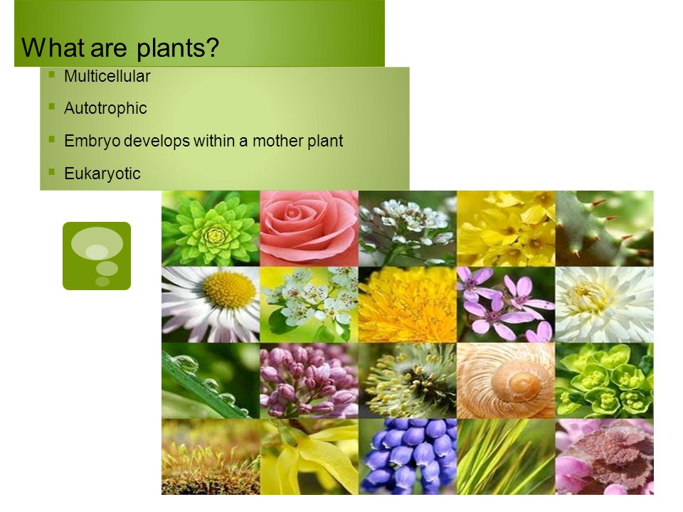 What are plants Multicellular Autotrophic