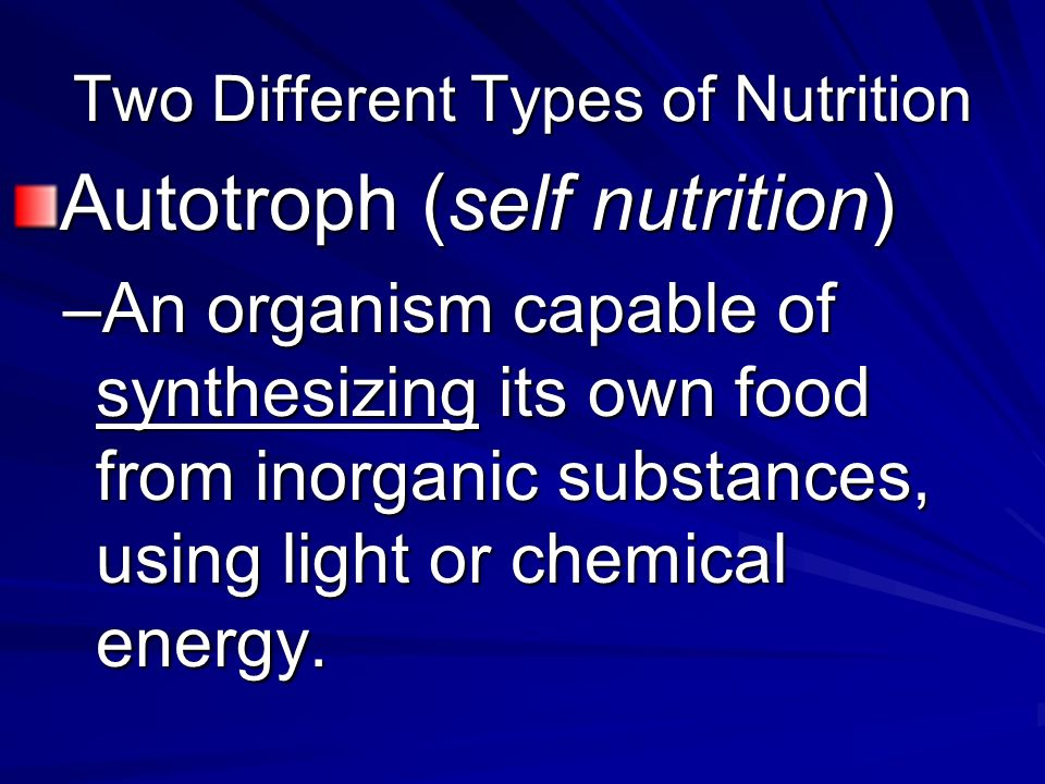 An Organism Capable Of Synthesizing Its Own Food