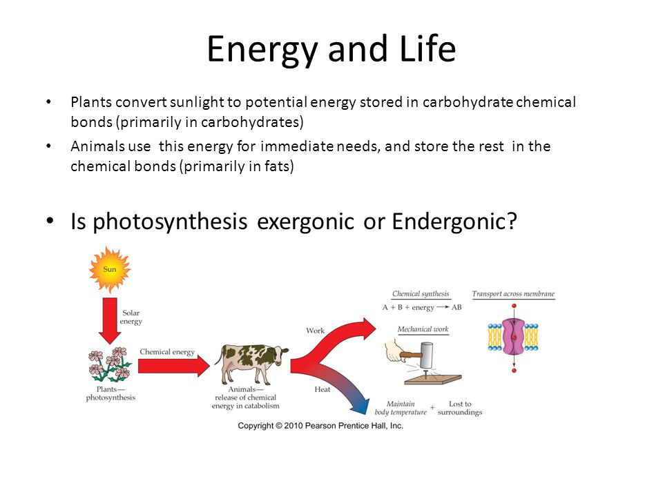 The generation of biochemical energy ppt video online download 9 energy and life is photosynthesis ccuart Gallery