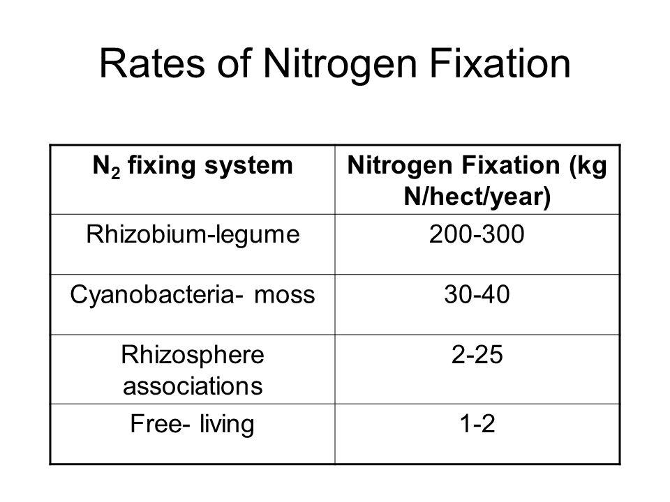 nitrogen fixation in cyanobacteria pdf