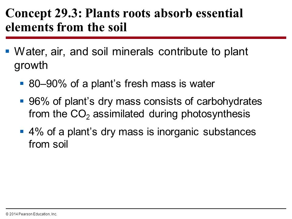 Resource acquisition nutrition and transport in vascular for What substances are in soil