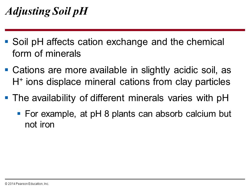 Resource acquisition nutrition and transport in vascular for What are soil minerals
