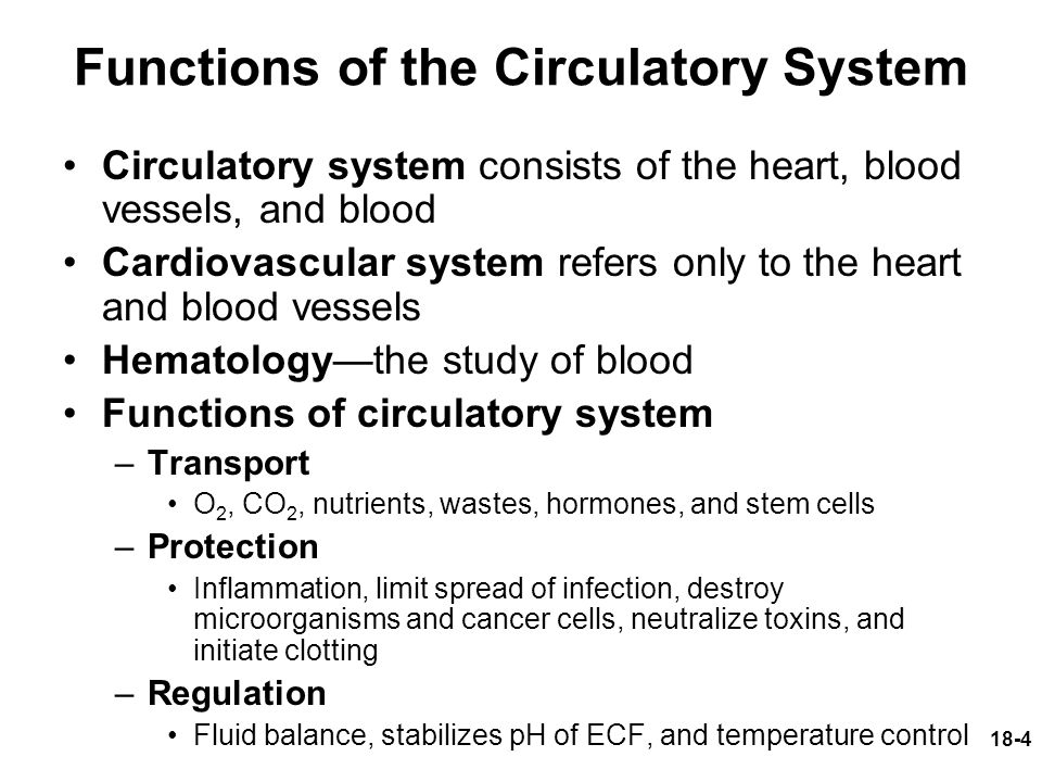 what are four functions of the circulatory system