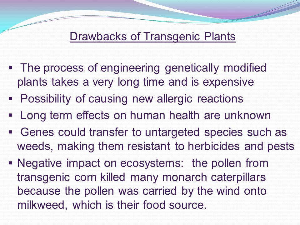the negative consequences of genetically modified food essay After the consumption of gmo increased, some negative consequences revealed such as allergic reactions, disabilities and damaged organs to prevent these hazards, some effective solutions should be sought and the purpose of this paper is to propose some solutions to the negative effects of gmo on human health in america.